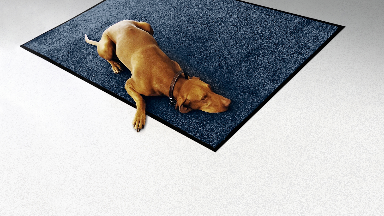 Floor Care Dog