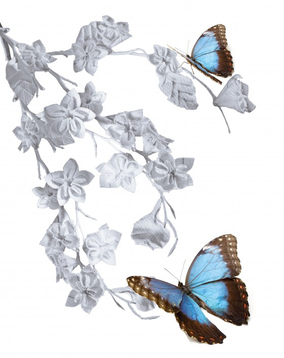Schmetterling mit Kirschblüte
