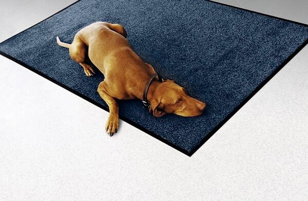 Hond liggend op een standaard mat