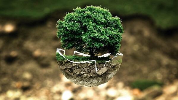 Plant een bos
